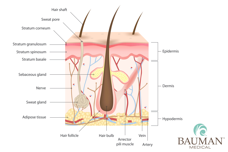 ALMI Autologous Lipocyte Micronized Injection for Hair Regrowth